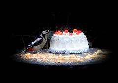 all mine (BrigitteE1) Tags: buntspecht greatspottedwoodpecker dendrocoposmajor torte cake vogelfutter bird vogel birdfood astonished erstaunt homemade pflanzenfett vegetablefat