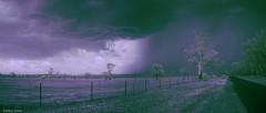 Storm imminent (IR false colour) (i-lenticularis) Tags: bethungratemorard infraredfalsecolour contaxg21f28 ricohgxra12ir ruralscene stormcloud australia newsouthwales
