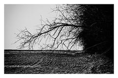 The three-thirds rule (Claudio Nichele (@jihan65 on Twitter)) Tags: tree arbre solitude paysage lanscape winter hiver arbreseul treealone nature naturelove wintertime hiking neige gel snow ice