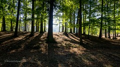 Sunbeams passing through the trees (WonderfulSnaps.com) Tags: 2018 brno holedna park hill passing sunbeams leaf road natural autumn light scenic outdoor