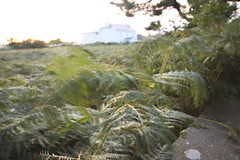 Field of ferns 4 (topquark22) Tags: ireland rosslare ferns file:name=img6785