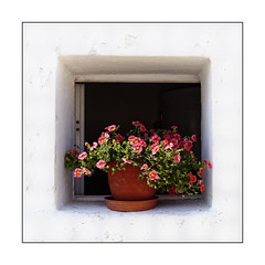 Les fleurs rouges (Jean-Louis DUMAS) Tags: fleurs flower rouge carré square window fenêtre