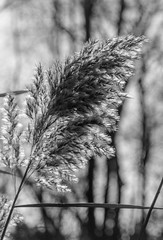Blowing in the Wind (114berg) Tags: 22nov18 thanksgiving walk hennepin canal geneseo illinois