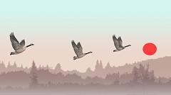 Canadian Landscape (EOSXTi) Tags: landscape birdwatching geese photoart stylized canadian awardtree cubism naturescomposition