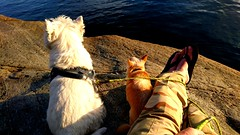 Boatspotting. (Papa Razzi1) Tags: boatspotting september sunset evening 2018 westie chihuahua ture melker