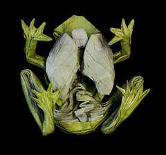 IOIO 2018 - Origami GLASS FROG!!! (from below) (Tankoda) Tags: origami paper art travis nolan tankoda ioio international internet olympiad 2018 glass frog south america costa rica amphibian transparent underbelly abdominal tissues organs lungs gut heart wet folded double tissue mc mulberry water methyl cellulose methylcellulose green white