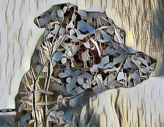doggeh (CatnessGrace) Tags: mobileart handheldart pixlr painnt goart dog pets dogs blue beige creme brown