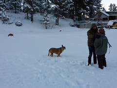 The world is mine (simonov) Tags: bella dog hund chien 狗 σκύλοσ madra cane 犬 perro 개 سگ собака الكلب germansheprador skytavern reno mountains snow winter christmas ryan candice man woman