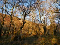 Glasdrum National Nature Reserve (Niall Corbet) Tags: scotland argyll glasdrum nationalnaturereserve nnr woodland