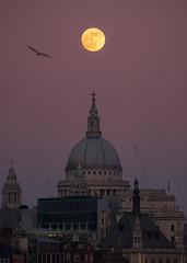 CityMoon (James_Beard) Tags: moon supermoon stpaulscathedral stpauls dusk sunset waterloobridge london fujixt2 fujinonxf55200