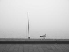 kiel_P1191780 (ghoermann) Tags: deu d쳴ernbrook geo:lat=5433260161 geo:lon=1015189584 geotagged germany kiel schleswigholstein bird seagull balticsea düsternbrook fog