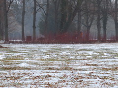 a walk in the park (germancute) Tags: arnstadt