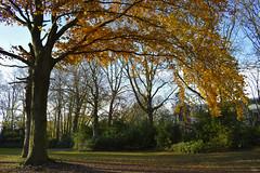 Autumn in West Vlaanderen (guidocasati) Tags: belgium europe autumn autunno automne nature trees tree foliage catchy colors vlaanderen