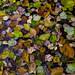 november leaves in a pond