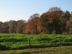 IMG_9196 (Momo1435) Tags: eindhoven brabant waalre herfst herfstkleuren netherlands autumn fall colors
