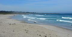 DSC_0240 (afagen) Tags: california pacificgrove asilomarstatebeach montereypeninsula asilomar beach pacificocean ocean