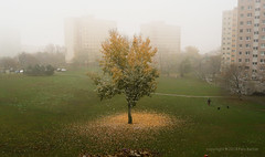 18Nov 19: Winter is Near (Johan Pipet 2M+ views) Tags: flickr jeseň autumn fall winter tree strom meadow par suburb city mesto sídlisko dúbravka dubravka pod záhradami fog mist hmla urban bratislava slovakia slovensko eu europe palo bartos bartoš canon g7x snow sneh zima