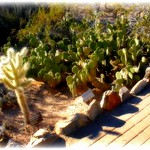 a walk in a desert garden thumbnail
