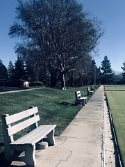 Benches on Repeat (Melinda * Young) Tags: benchmonday hbm monday rossmoor sport grass lawn bench benches bocceball bowling lawnbowling retirement ca effect mac photos sidewalk