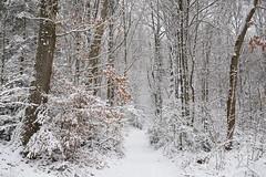 Forêt enneigée (Excalibur67) Tags: nikon d750 sigma globalvision art 24105f4dgoshsma paysage landscape forest foréts arbres trees nature neige snow