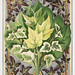 Various Ivy Leaves from The Ivy, a Monograph (1872) by Shirley Hibberd (1825–1890). Digitally enhanced from our own original edition.