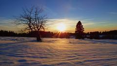 Le Champ du Feu ... brillant de mille feux ! (ViveLaMontagne67) Tags: france vosges alsace basrhin 67 champdufeu coucherdesoleil soleil nature hiver paysage nuages sapin arbre plateau rayonsdesoleil briller ensoleillé éclats reflets lumière neige neigevierge immaculée ciel bleu cielbleu bluesky blue sky immaculate pristinesnow snow light sunlight shine glints sunny sunbeams tree firtree clouds landscape snowscape winterscape winter sun sunset