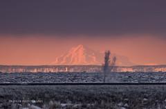 Mirage (Traylor Photography) Tags: alaska pottermarsh mirage mountredoubt sunrise volcano fatamorgana anchorage unitedstates us