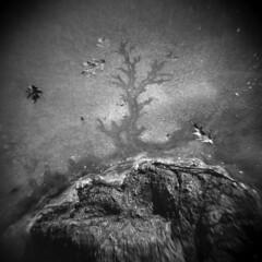 Silver Lake in Winter #37 (LowerDarnley) Tags: holga silverlake winter ice crack lake rock leaves shore frozen saugus ma breakheartreservation