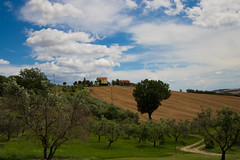 Azienda Agraria Guerrieri. (weggum) Tags: 2018 guerrieri italië piagge vakantie wines pasta olives fields trees lemarche potereseipoorte excursion italy willem mugge weggum