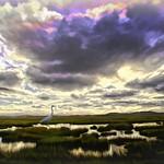 Clouds and Salt Marsh thumbnail