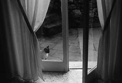 rainy day (Vinzent M) Tags: tellaro italien italia leica r4 summicron 50 agfa apx100 rodinal zniv thecatwhoturnedonandoff littledoglaughednoiret