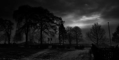foggy morning (johnny_9956) Tags: scotland blackandwhite monochrome trees landscape outdoor outside fog