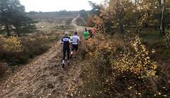 haarlerbergloop 10 km (45)