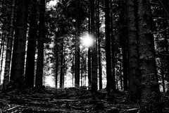 here you are (kceuppens) Tags: sun black zwart wit white bw blackandwhite zw trees tree boom bomen fuji xt20 forste wood lucht sky fujixt20 1855 wandeling walk forest bos