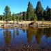 Cool, clear water, Tuolumne River, Yosemite 2018