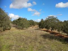 IMG_20181121_125707 (Fernando Moital) Tags: azinhal montado lpn ataboeira castroverde azinheiras