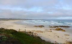 DSC_0583_2 (afagen) Tags: california pacificgrove asilomarstatebeach montereypeninsula asilomar beach pacificocean ocean