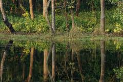 Jungle Reflections, Chitwan National Park (jim_2wilson) Tags: chitwan nepal sonya77 jimwilson nationalpark sony70400mmssmii reflections trees jungle lake