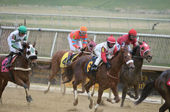 "2018-11-30 (22) r7 other horses came in safely (JLeeFleenor) Tags: photos photography md marylandhorseracing maryland marylandracing laurelpark jockey جُوكِي ""赛马骑师"" jinete ""競馬騎手"" dżokej jocheu คนขี่ม้าแข่ง jóquei žokej kilparatsastaja rennreiter fantino ""경마 기수"" жокей jokey người horses thoroughbreds equine equestrian cheval cavalo cavallo cavall caballo pferd paard perd hevonen hest hestur cal kon konj beygir capall ceffyl cuddy yarraman faras alogo soos kuda uma pfeerd koin حصان кон 马 häst άλογο סוס घोड़ा 馬 koń лошадь outdoors outside"