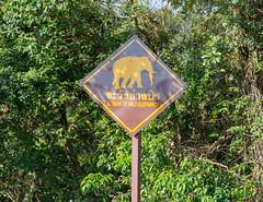 53537-Khao-Yai (xiquinhosilva) Tags: 2017 dongphayayen hintung khaoyai mueangnakhonnayokdistrict nationalpark park thailand unescoworldheritage tambonmusi changwatnakhonratchasima th