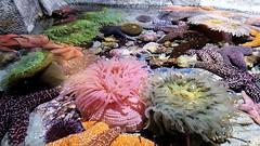 20180920_163649 (bryandkeith) Tags: unitedstates aquariumofthepacific longbeach
