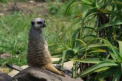 20181209DSC08732 (mchlphlmnn) Tags: afrika africa südafrika southafrica southernafrica westcape gardenroute