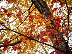 20181104-155019-027 (JustinDustin) Tags: 2018 attraction autumn blairsville fall ga georgia nga northamerica northgeorgia seasonal us usa unitedstates vogelstatepark year
