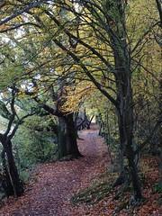 Mid autumn medley 1 (Phil Gayton) Tags: trail track path leaves foliage tree fall autumn riverside walk totnes devon uk