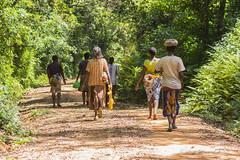 180919 Kakamega Forest National Reserve   -8496 (Serge Léonard) Tags: kakamegaforestnationalreservekenya kenya kenyakenyen oiseaux transport avion continentafricain humain