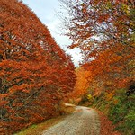 forestales thumbnail