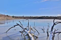 Winter Lake (Hugo von Schreck) Tags: hugovonschreck lake see winter grebenhain hessen deutschland givemefive canoneos5dsr tamron28300mmf3563divcpzda010