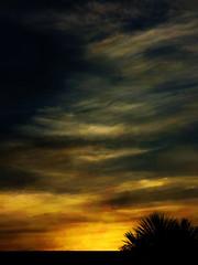 A Cloudy Sunset (Steve Taylor (Photography)) Tags: cabbagetree digitalart roof black grey orange yellow newzealand nz southisland canterbury christchurch leaves tree silhouette autumn twilight dusk sky cloud sundown sunset