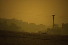 The New Golden State (Carrie McGann) Tags: smoke hills eldoradohills sun trees telephonepole wires freeway hwy50 gold goldcountry 111518 nikon nikond850 interesting