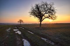 Le jour se lève encore (Excalibur67) Tags: nikon d750 sigma globalvision 24105f4dgoshsma art arbres trees paysage landscape levéedesoleil ciel sky campagne nature
